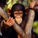 """¿Qué significa soñar con """"ser un mono del zoo""""?"""