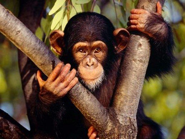 soñar con ser mono en el zoo