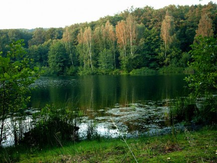 soñar con haberse perdido en un bosque con un lago