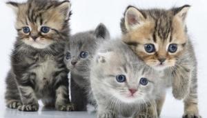 significado de soñar con gatos