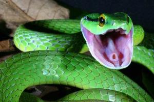 soñar con una serpiente
