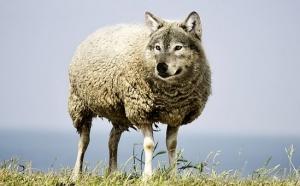 Soñar con lobos, significado