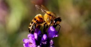 Soñar con abejas significado