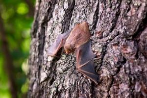 Soñar con murciélagos significado