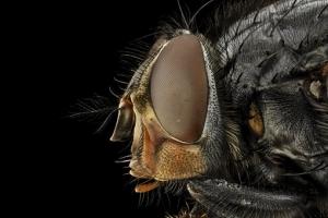 Soñar con moscas significado