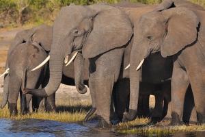 Soñar con elefantes significado