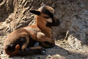 Soñar con animales significado