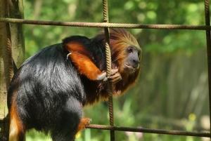 Soñar con ser un mono de zoo encerrado