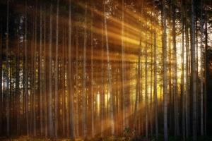 Significado de soñar que estamos perdidos en un bosque