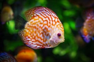 Soñar con peces significado